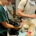 Bewerbung als Tierpfleger: Hier 7 Tipps für Sie [2021]