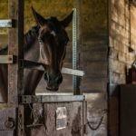 Bewerbung für eine Ausbildung zum Pferdewirt [2021]